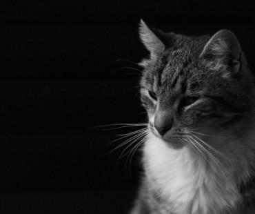 Bal na Kociej – fotorelacja